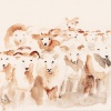 Ovce bulje!
