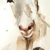 Glava koze