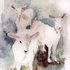 Koze s Mosora