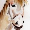 Glava konja