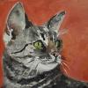 Mačka iz Eindhovena